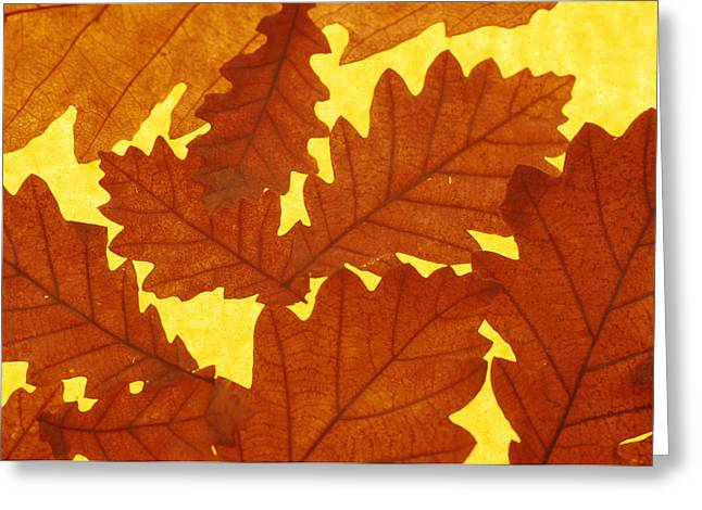 Quercus Greeting Cards - Oak (quercus Sp.) Leaves Greeting Card by David Aubrey