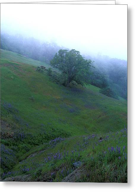 Landscape Framed Prints Greeting Cards - Oak with Lupine in Fog Greeting Card by Kathy Yates