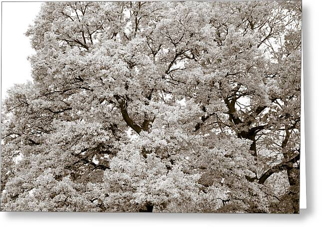 Quercus Greeting Cards - Oaks Greeting Card by Frank Tschakert