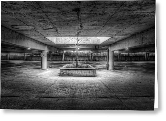 Concrete Greeting Cards - Oasis Greeting Card by Scott Norris