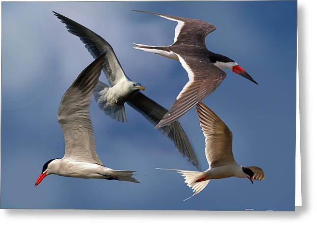 Sea Birds Greeting Cards - Ocean Bird Collage Greeting Card by David Salter