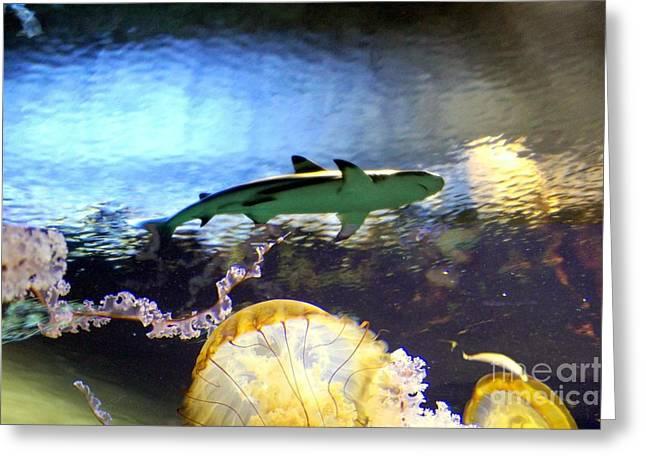Ocean Encounter Greeting Card by Kevin Moore