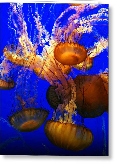 Jelly Fish Greeting Cards - Ocean Jellyfish Greeting Card by Anthony Citro