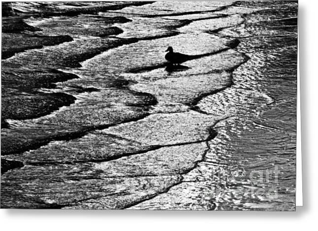 Tidal Photographs Digital Art Greeting Cards - Ocean Surf Beach Scene in Black and White Format Greeting Card by Carol F Austin