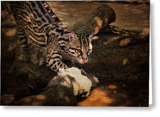 Wildcats Greeting Cards - Ocelot Greeting Card by Jai Johnson