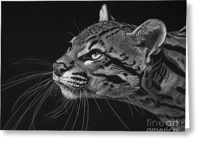 Cat Drawings Greeting Cards - Ocelot Greeting Card by Sheryl Unwin