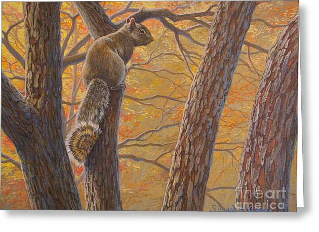 Pause Greeting Cards - October - Eastern Gray Squirrel in Redbud Tree  Greeting Card by Susan A Walton
