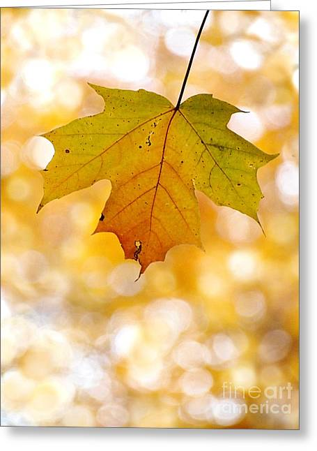 October Maple Leaf Greeting Card by Angie Rea