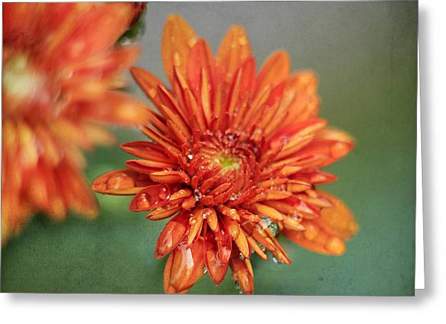October Mums Greeting Card by Darren Fisher