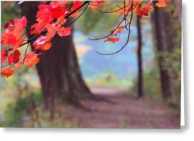 October Walk Greeting Card by Mandi Howard