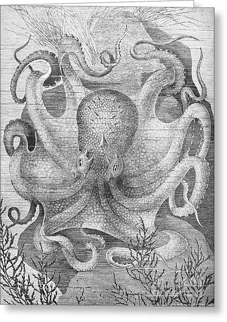 Aquatic Greeting Cards - Octopus Greeting Card by Granger