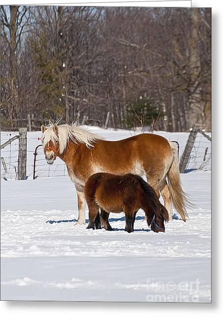 Horse Photography Greeting Cards - Odd Couple Greeting Card by Michael Cummings