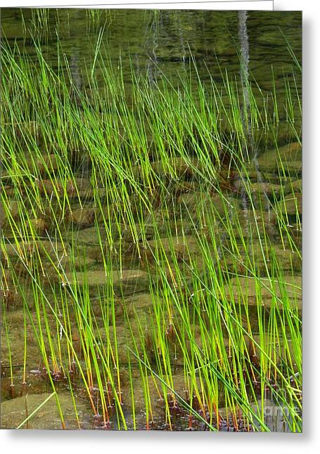 Pond In Park Greeting Cards - Of Rocks and Grass Greeting Card by Meandering Photography