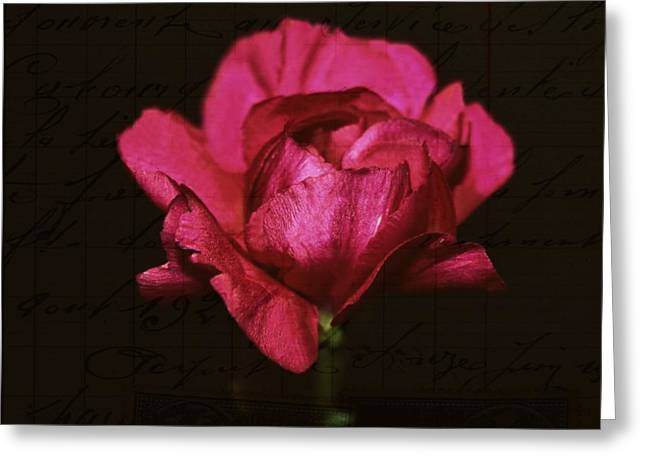 Pink Carnations Greeting Cards - Of the past Greeting Card by Cathie Tyler