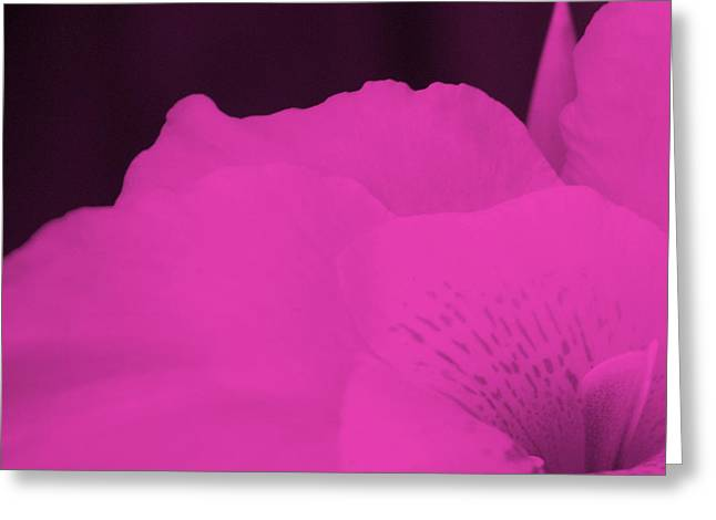 Oh Canna You See in Pink Greeting Card by Diane  Fiore