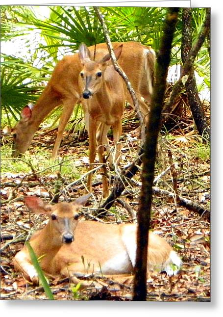 Oh Deer Three Greeting Card by Sheri McLeroy