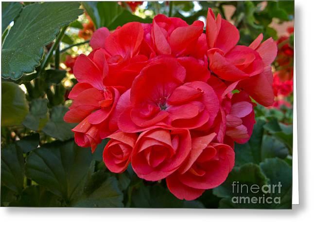 Oh My Red Greeting Card by Arlene Carmel