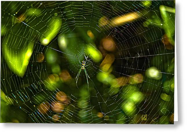 Oh The Web We Weave Greeting Card by Barbara Middleton