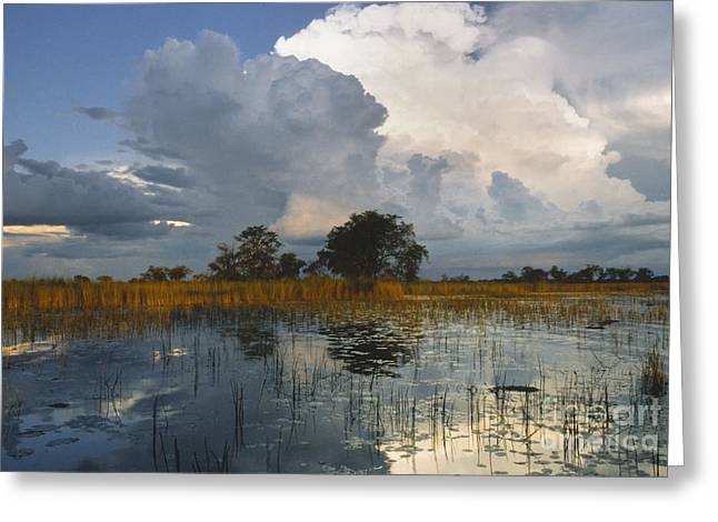 Backlit Greeting Cards - Okavango Delta Evening Greeting Card by Sandra Bronstein