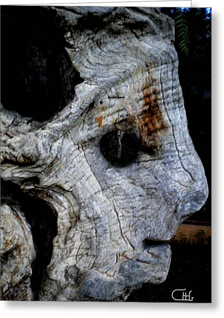 Framedprint Greeting Cards - Old ancient Olive Tree in Spain Greeting Card by Colette V Hera  Guggenheim