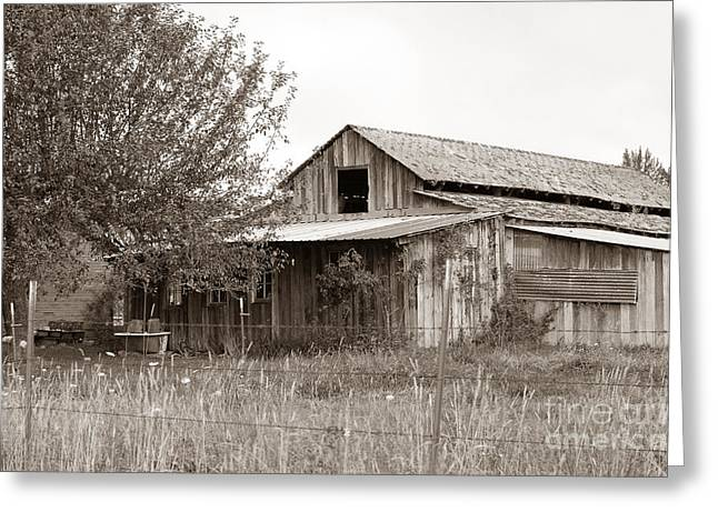 Old Barn In Sepia  Greeting Card by Connie Fox