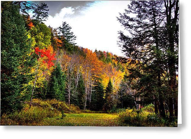Fir Trees Greeting Cards - Old Country Road in Inlet Greeting Card by David Patterson