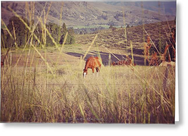 Methow Greeting Cards - Old Country Road Greeting Card by Sarai Rachel