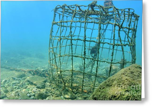 Undersea Photography Greeting Cards - Old fishing cage underwater Greeting Card by Sami Sarkis