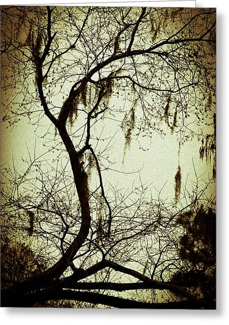 Florida Landscape Photography Greeting Cards - Old Florida Tree Greeting Card by Carolyn Marshall