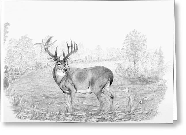 Jordan Drawings Greeting Cards - Old Mossy Horns Greeting Card by Steve Maynard