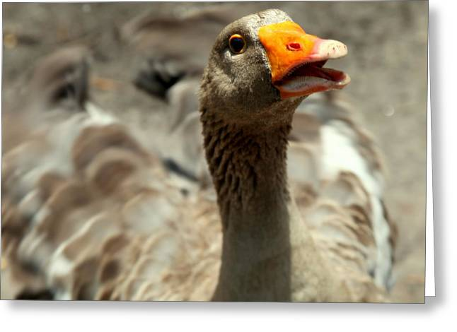 Old Mother Goose Greeting Card by Karen Wiles