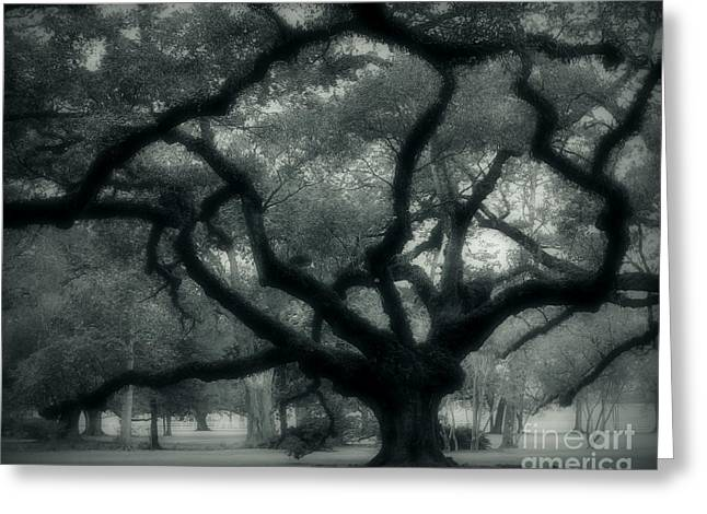 Old Oak Greeting Card by Perry Webster