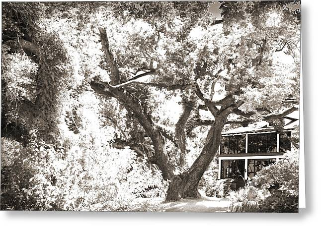 Surreal Infrared Sepia Nature Greeting Cards - Old Oak Tree Greeting Card by Barry Jones