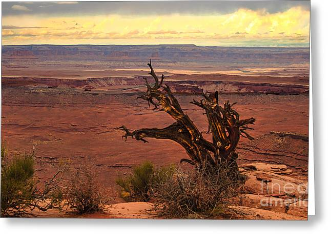 Primitive Desert Greeting Cards - Old One Greeting Card by Robert Bales