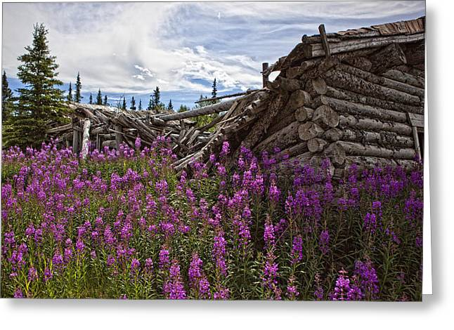 Silver City Greeting Cards - Old Trappers Cabin Surrounded Greeting Card by Robert Postma