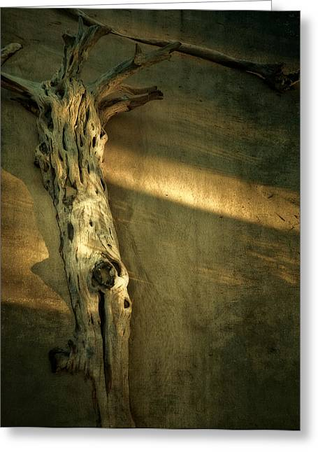 Mario Celzner Greeting Cards - Old Tree in Sand Greeting Card by Mario Celzner