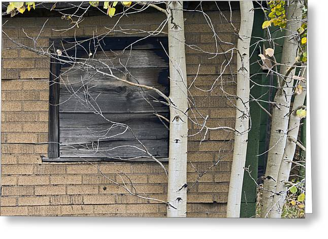 Cabin Wall Greeting Cards - Old Window And Aspen Greeting Card by James Steele