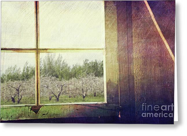 Spring Floors Greeting Cards - Old window looking out to apple orchard Greeting Card by Sandra Cunningham