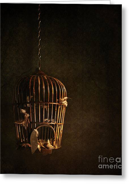 Confined Greeting Cards - Old wooden bird cage with feathers Greeting Card by Sandra Cunningham