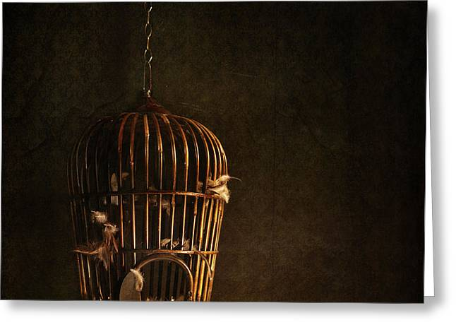 Old wooden bird cage with feathers Greeting Card by Sandra Cunningham
