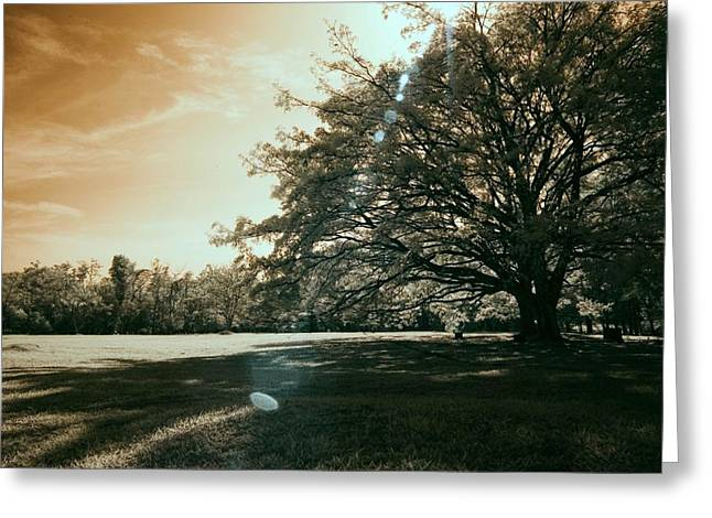 Print Greeting Cards - Oldtrees Greeting Card by Mario Bennet