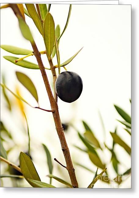Black Olives Greeting Cards - Olive Branch Greeting Card by Dean Harte