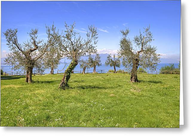 Olive Grove Greeting Cards - olive grove on Lake Gardan Greeting Card by Joana Kruse