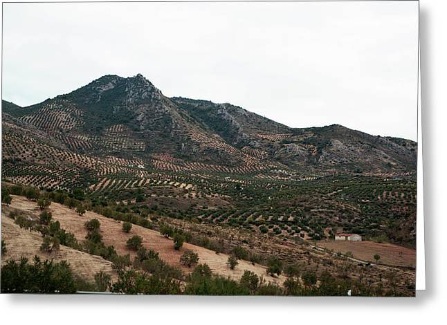 Southern Province Greeting Cards - Olive Oil Mountain Greeting Card by Lorraine Devon Wilke