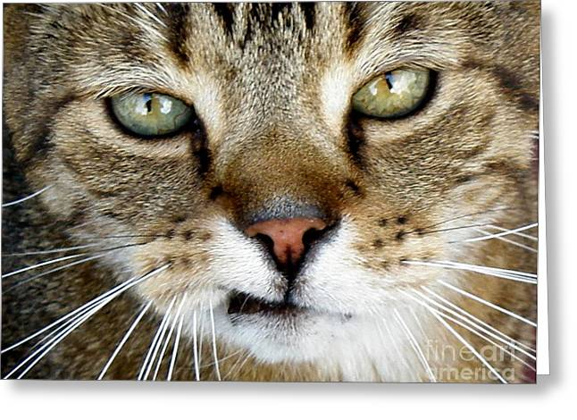 Lainie Wrightson Greeting Cards - Oliver the Cat Greeting Card by Lainie Wrightson