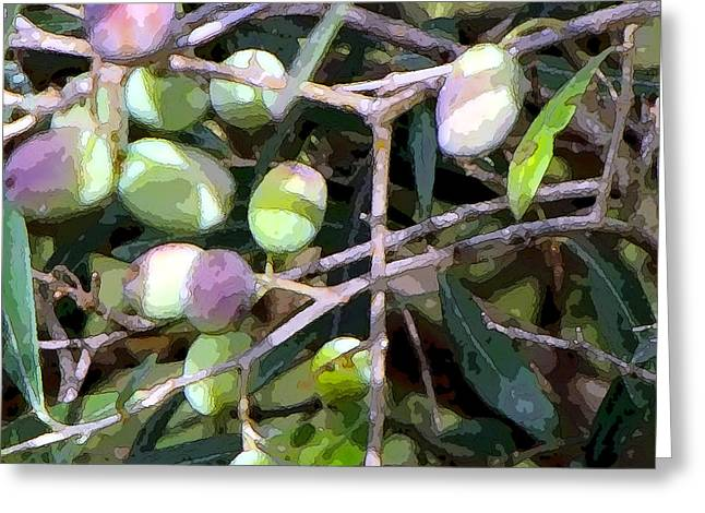 Olive Branch Greeting Cards - Olives Greeting Card by Mindy Newman