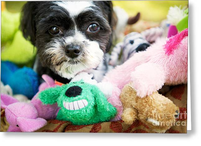 Pet Photography Greeting Cards - Ollie and Friends Greeting Card by Kim Fearheiley