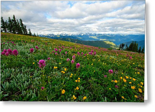 Olympic Mountains Greeting Cards - Olympic Mountains Wildflowers Greeting Card by Dan Mihai