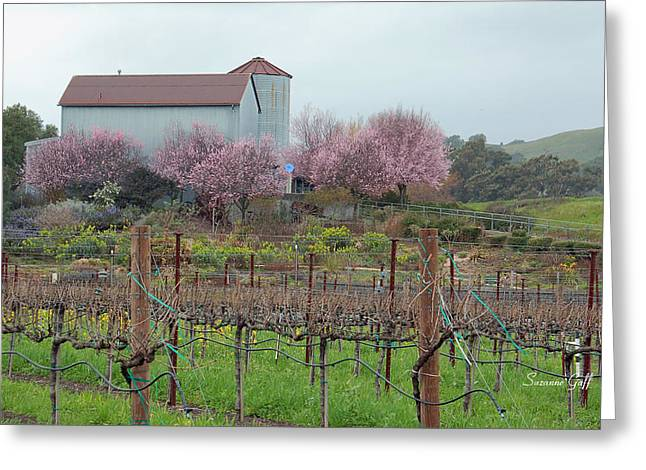 Napa Valley Canvases Greeting Cards - On a Hill in Napa Greeting Card by Suzanne Gaff