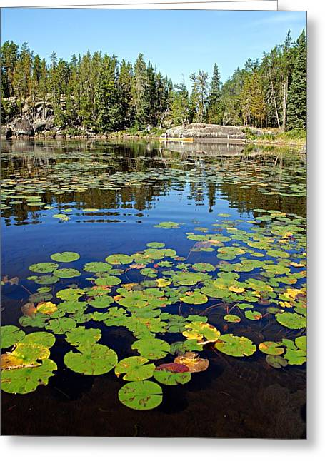 Canoeist Greeting Cards - On a Lily Pond - 2 Greeting Card by Larry Ricker